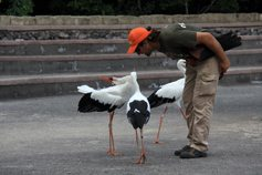 Птицы Джангл Парка
