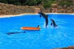 Дельфины и ребенок