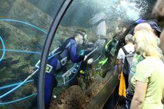 Водолазы в аквариуме Лоро парка