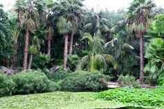 Природа Лоро парка.