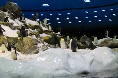 Айсберг на Тенерифе