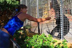 Шимпанзе в парке обезьян