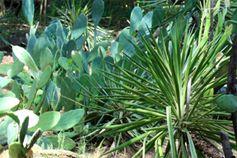 Растения Хорватии